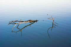 Branch in the Water Royalty Free Stock Photo