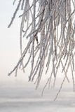 Branch of weeping willow covered by snow and frost in winter, close to the Dnieper river Stock Photo