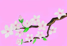 Branch with white flowers on pink background Royalty Free Stock Image
