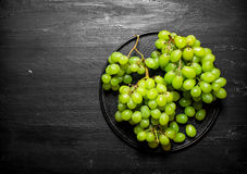 Branch of white grapes on a plate. Royalty Free Stock Photo