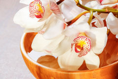 Branch of white orchid in bowl Stock Photography