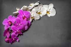 A branch of white and pink orchids. Greeting card. Beautiful composition. royalty free stock photos