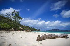 Branch in the white sand on curieuse island on the seychelles 6 Stock Photos