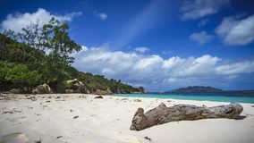 Branch in the white sand on curieuse island on the seychelles 1 Royalty Free Stock Image
