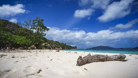 Branch in the white sand on curieuse island on the seychelles 4 royalty free stock images