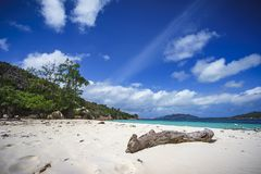 Branch in the white sand on curieuse island on the seychelles 7 Royalty Free Stock Images