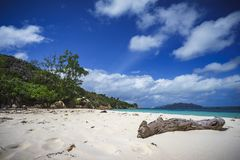 Branch in the white sand on curieuse island on the seychelles 10 Stock Image