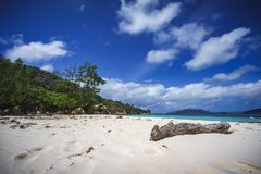 Branch in the white sand on curieuse island on the seychelles 9 Royalty Free Stock Photos