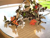 The branch of wild ash  in autumn . The branch of wild ash  in autumn lies on a table from a rattan in a sunny day. Rowanberry , sorb, wild ash Stock Image