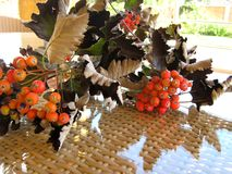 The branch of wild ash  in autumn . The branch of wild ash  in autumn lies on a table from a rattan in a sunny day. Rowanberry , sorb, wild ash Stock Images