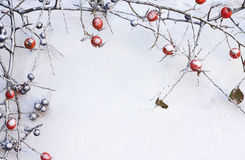 Branch of wild rose and blackthorn with fruits in snow Stock Photo