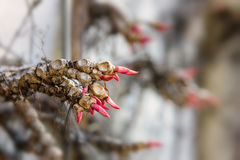 Branch of a wild wine plant forming a hand to show the way Royalty Free Stock Image