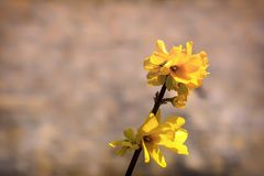 Branch of wild yellow flowers Stock Image