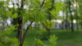 Branch wind trees green stock footage
