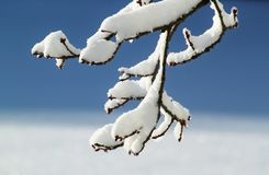 Branch, Winter, Snow, Winter Magic Stock Images