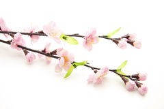 Free Branch With Blossom Stock Images - 17488554