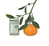 Branch With Hunging Tangerine And Dollar Bill Royalty Free Stock Photography