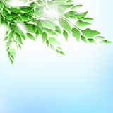 Branch With Leaves Stock Photography