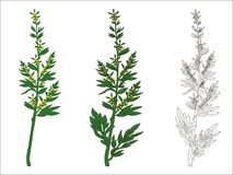 Branch of wormwood. Vector illustration Royalty Free Stock Photography