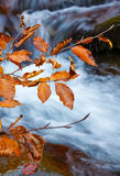 Branch yellow autumn leaves hanging over mountain river with blue water royalty free stock images