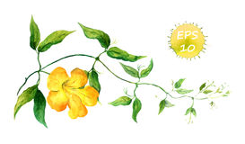 Branch of yellow bindweed Royalty Free Stock Image