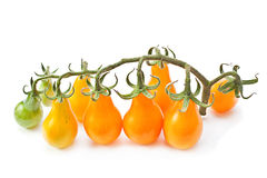 Branch yellow cherry tomatoes Stock Photography
