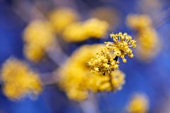 branch with yellow flower Royalty Free Stock Images