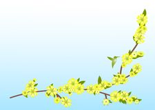 Branch with yellow flowers. On a blue background with the silhouette of humming-bird Royalty Free Stock Image