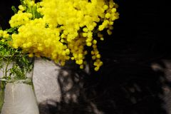 A branch of yellow flowers of mimosa in a glass vase on a black background. stock image
