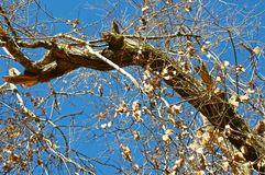 The Branch. With the yellow leaves on the blue sky background Royalty Free Stock Photography