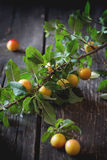 Branch of yellow plums Stock Images
