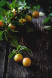 Branch of yellow plums Royalty Free Stock Photo