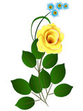 Branch with a yellow rose and blue flowers. Branch with a yellow rose and blue flowers on a white background Stock Image