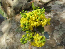 Branch with yellow small flowers. Close-up against a background of stones royalty free stock photos
