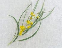 Branche élégante d'arbre de mimosa sur le textile photographie stock