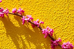 Free Branche And Flower Of The Chinese Royalty Free Stock Photos - 179917198