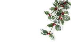 Branche artificielle de houx avec des fruits - aquifolium d'Ilex Image stock