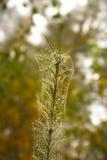 Branche avec de la toile d'araignée Photo stock