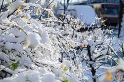 Branche avec des feuilles couvertes de morceaux de glace Bel hiver en ville Macro photographie stock libre de droits