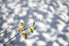 Branche avec des feuilles couvertes de morceaux de glace Bel hiver Macro photos libres de droits