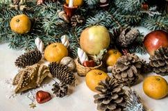 Branche conifére avec le fruit, les pâtisseries, les cônes et les écrous Images stock