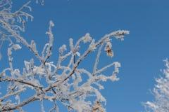 Branche couverte de gel Photographie stock