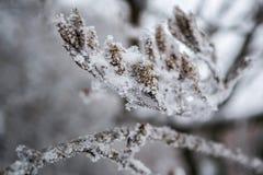 Branche couverte de gel Image stock