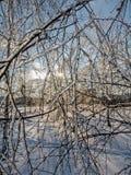 Branche, couverte de la glace Photos libres de droits