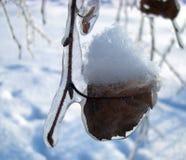 Branche couverte de la glace Images libres de droits