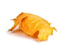 Branche d'érable d'automne avec des feuilles d'isolement Images libres de droits