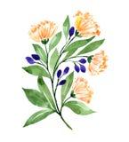 Branche d'aquarelle avec des brosses d'orange et des baies violettes, photographie stock