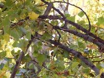 Branche d'arbre Photographie stock libre de droits