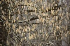 Branche d'arbre Photos libres de droits