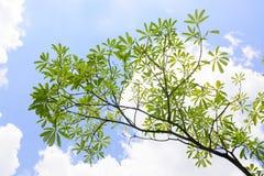 Branche d'arbre Photos stock